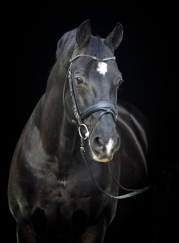 Negro- sire of Valegro